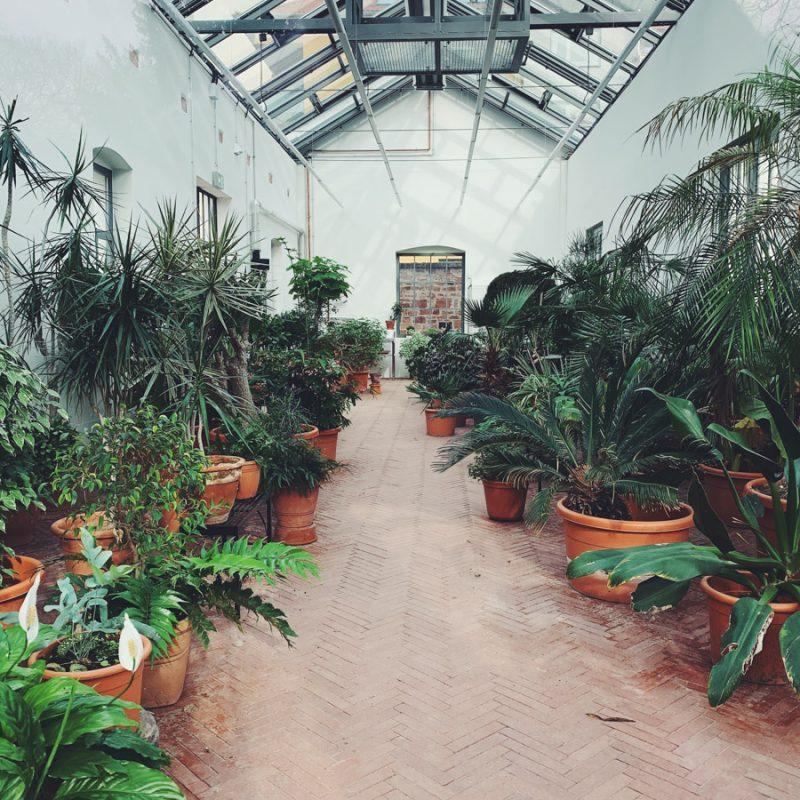 Pflanzen im Bethmannpark